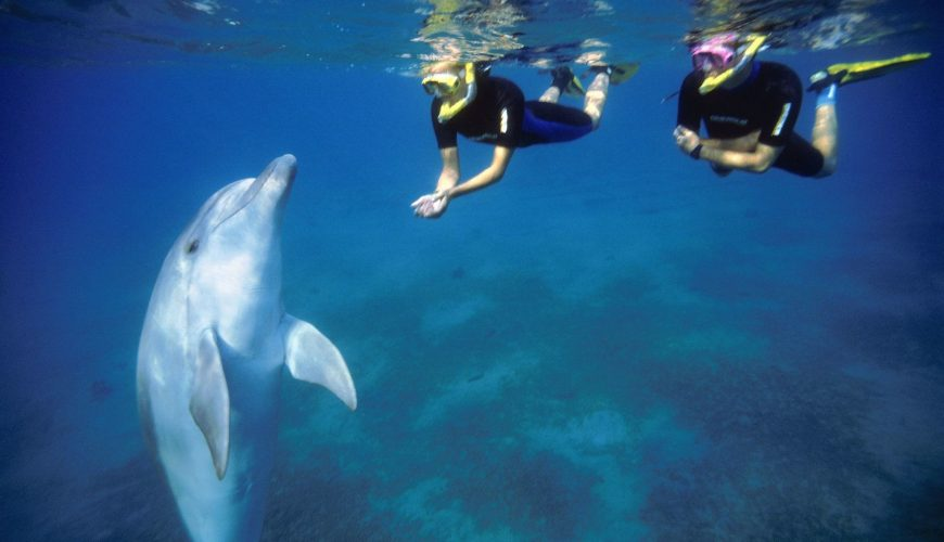 Eastern Tourism - Swimming with Dolphines
